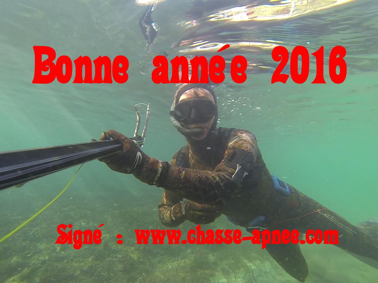 bilan chasse sous-marine 2016